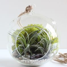 Geode and Pyrite Air Plant Terrarium Kit – Bird and Feather