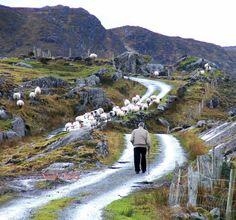 West Cork sheep, Ireland. Images Of Ireland, Love Ireland, England Ireland, England And Scotland, Ireland Travel, Irish Landscape, Ireland Landscape, West Cork, Irish Roots