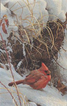 Art of Robert Bateman