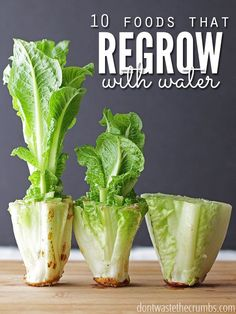 Foods like lettuce will regrow when they're placed in a container of just water—no dirt required.