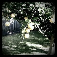 She feeds you tea and oranges that come all the way from China -- Leonard Cohen emmaginary.tumblr...