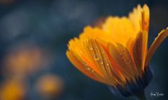 lift a finger | Flickr - Photo Sharing!