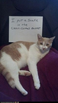 "* * "" Der iz no such thing az 'cat shaming'. Only   fer dogs. Dis doesn'ts affect meez in de least."""
