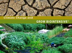 Download a free booklet on climate change & biointensive farming http://www.growbiointensive.org/