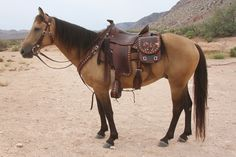"""""""Calico Renegade"""", champion mustang - in his SKYHORSE outfit"""