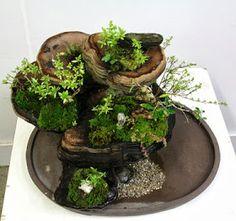 Blog Bonsai: Bonsai Center Sopelana. Tienda de bonsais Bilbao : Penjing on a fungus