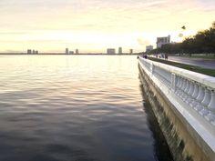 Tampa's Historic Bayshore Boulevard – Susie Trexler Linear Park, Park Trails, Sandy Beaches, Travel Around, Old Houses, The Neighbourhood, Florida, Branding, Landscape