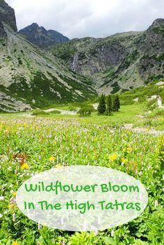 Photo essay: Wildflower Bloom in the High Tatras
