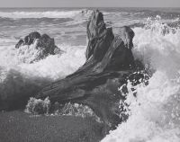 Wave and Log, Ansel Adams