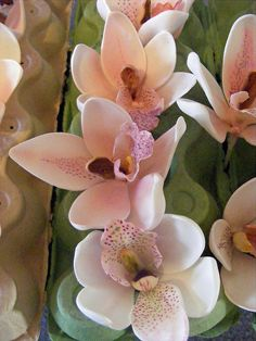 Orchids - sugar flowers