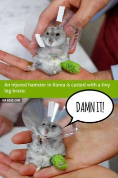 Poor Hamster's Tiny Leg Cast Stops It From Rolling Around