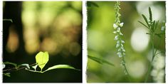 green and white by taralees on flickr