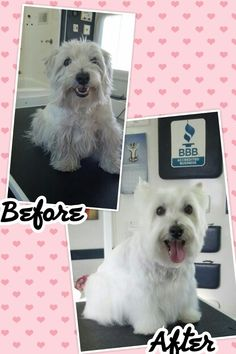 Dog groomer posters for grooming salons work place pinterest daisy solutioingenieria Image collections