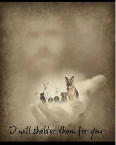 God loves our fur babies! He wouldn't let them just cease to exist; Animals do have a soul, and we'll see them again in heaven. All Dogs, I Love Dogs, Puppy Love, Dogs And Puppies, Doggies, Animals And Pets, Cute Animals, Pet Loss Grief, Pet Remembrance