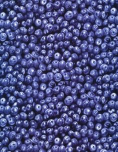 Blueberry Blueberries Packed Fruits Food Cotton Fabric Print by Yard D571.42