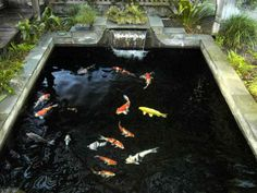 Planning & Ideas:Koi Pond Construction Features Koi Pond Construction Plans