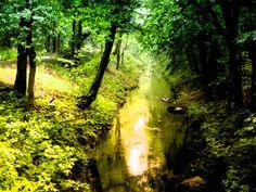 https://flic.kr/p/LPtkR9 | forest