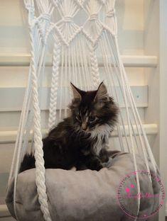 I made macramee hammock for cat Cat Hammock, Kitten, Cat Cat, Instagram Posts, Animals, Baskets, Diy Ideas, Gatos, Cute Kittens