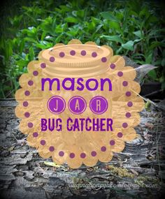 Mason jar bug catcher, so quick. I wish I would have thought of this years ago!