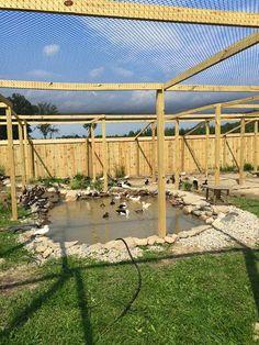 25 best ideas about Duck Pens Backyard Ducks, Backyard Farming, Chickens Backyard, Backyard Chicken Coops, Chicken Coop Plans, Diy Chicken Coop, Raising Ducks, Raising Chickens, Duck Enclosure