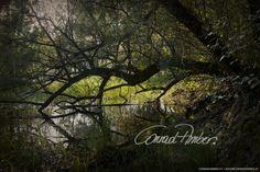 Motive finden - Conrad Amber