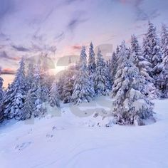df6044276 Winter Pine Forest Shower Curtain on CafePress.com Paisajes De Invierno