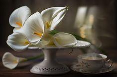 1X - Calle flowers by Mystic Light (Piga&Catalano)