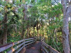Carrabelle Florida, Saint George Island, Franklin County, Type 3, Trail, River, Facebook, Beach, Plants