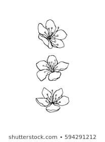 cherry blossom tattoo Similar Images, Stock Photos amp; Vectors of Set of cherry blossoms. Collection of flowers of sakura. Black and white drawing of spring flowers. Cherry Drawing, Cherry Blossom Drawing, Flower Art Drawing, Floral Drawing, Flower Sketches, Cherry Blossom Outline, Cherry Blossom Tattoos, Black And White Flowers, Black And White Drawing