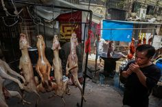 """A small victory for us:  Dog Meat Sales Reportedly Banned at Infamous Festival.  Animal advocates express hope that the ban is a """"nail in the coffin"""" for China's trade in dog and cat meat."""