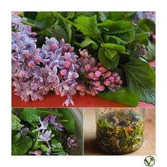 ŠEŘÍKOVÝ PLEŤOVÝ OLEJ | Kuchařka ze Svatojánu | Bloglovin' Cosmetics, Masky, Plants, Beauty Products, Flora, Plant, Planting, Drugstore Makeup