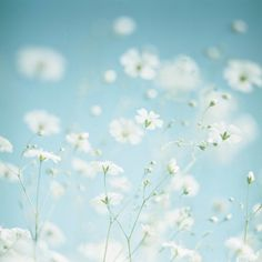 looking at this white, soft, delicate, heavenly beauty brought me some peacefulness and calm (24.5.2012, 11h50)