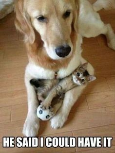 delight dog, funny animals, funni anim, funny animal pics, funny pictures