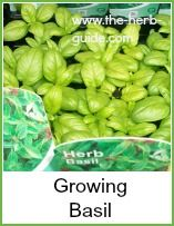 Basil is a great herb - fabulous with tomatoes and anything Italian. Click on the photo to read more about it!