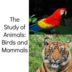 The Study Of Animals: Birds and Mammals