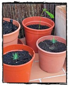 Tree growing kit ForestNation You plant one We plant one #imagineforestnation