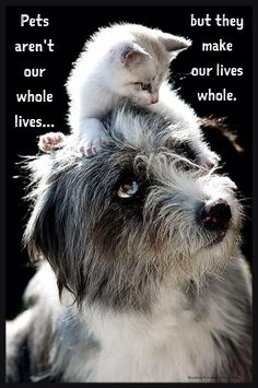 Animal Quotes: Pets aren't our whole lives but they make our lives whole! ❤