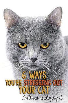 7 Ways to Keep Your Indoor Cat Happy | eBay