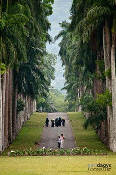 Botanical garden in Kandy - Sri Lanka