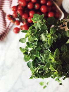 everything you need to know about oregano in the Italian cuisine | The Tomato Red Issue | The Gourmet Mag, an Italian Food Magazine