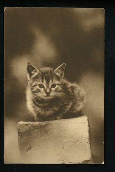 Cat Photo Postcard Kitten on block Vintage H.A. Frink