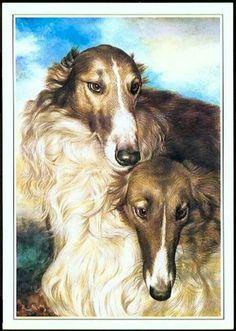 Beauty of the borzoi breed.