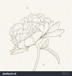 Peony Flowers. Brown On Beige Background. Vector Illustration. - 425298856 : Shutterstock