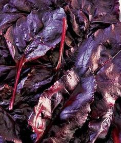 Lettuce - Bull's Blood Beet : Remodelista (Burpees)