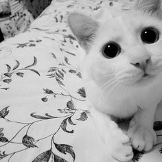 Kitttyyy