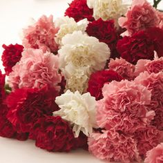 Increase your ROI when you use fresh cut flowers for fundraisers! Fundraising with flowers is not difficult and generates great returns - especially for Valentine's Day and Mother's Day! Carnations are by far the most popular flower for fundraisers and can be bought in bulk at low wholesale prices. Shop GrowersBox.com for bulk Carnations and other popular flowers for fundraisers.
