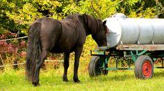 A Thirsty Neighbour. Horses, Animals, Animales, Animaux, Animal, Animais, Horse