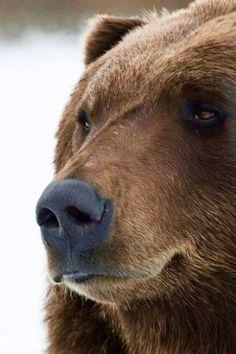 Мишка косолапый / cute bear– Google+