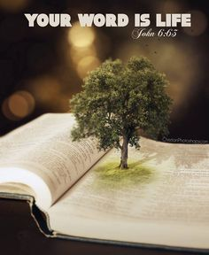 John 6:63. God counsel and strengthen us. John 6:68 only One place/Person (Prayer|Holy Word|Lord Jesus|Holy Spirit) to go to. Seeking the Great I AM for direction, instruction, counsel and strength that lasts and remains and grows.