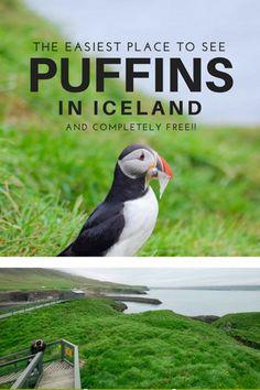 iceland-puffins.jpg